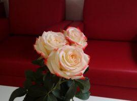 Ruže za stručnjakinje iz Savetovališta i poštovanje za volontere